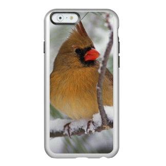 雪が多い松の木のメスの北の(鳥)ショウジョウコウカンチョウ、 INCIPIO FEATHER SHINE iPhone 6ケース