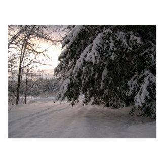雪で覆われたアメリカツガ ポストカード