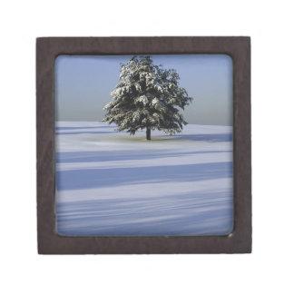 雪で覆われた景色の木 ギフトボックス