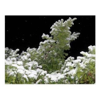 雪で覆われた松の木 ポストカード