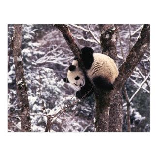 雪で覆われる木で遊んでいるパンダの幼いこども ポストカード