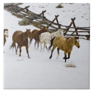 雪で走っている馬 タイル