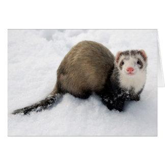 雪で遊んでいるフェレット カード