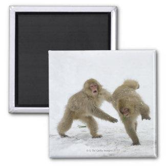 雪で遊んでいる日本のな雪猿の幼いこども マグネット