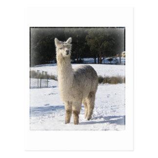 雪のアルパカ ポストカード