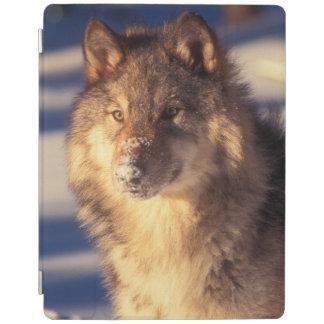 雪のオオカミ iPadスマートカバー