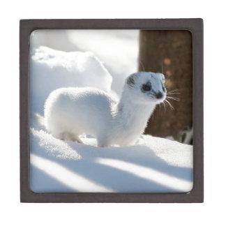 雪のフェレット ギフトボックス