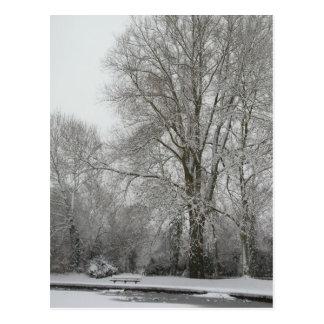 雪のヤナギ ポストカード