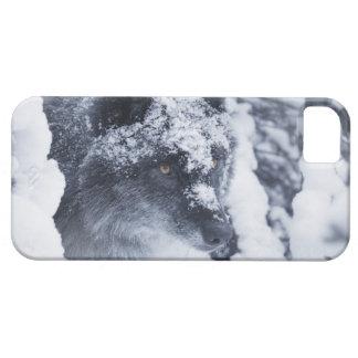 雪の一匹狼 iPhone SE/5/5s ケース