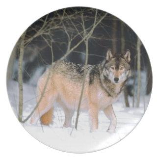 雪の写真乾板のオオカミ プレート