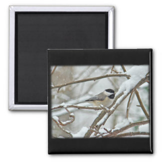雪の嵐の黒おおわれた《鳥》アメリカゴガラ マグネット