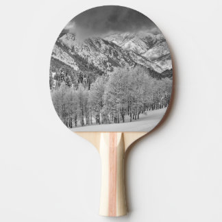 雪の常緑樹および《植物》アスペンの木は押しかけます 卓球ラケット