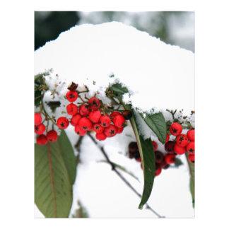 雪の帽子が付いているCotoneasterのフルーツ レターヘッド