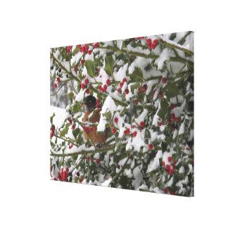 雪の後でヒイラギ木で保護しているロビン キャンバスプリント