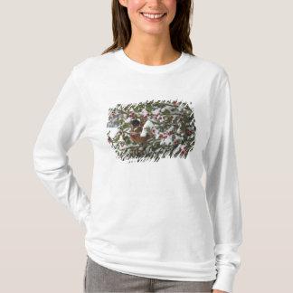 雪の後でヒイラギ木で保護しているロビン Tシャツ