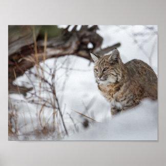 雪の欧亜のオオヤマネコの狩り ポスター