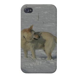 雪の白人のジャーマン・シェパード iPhone 4 ケース