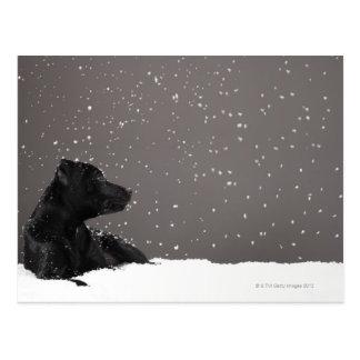 雪の監視雪片にあっている子犬 ポストカード