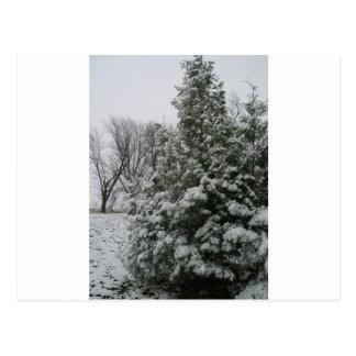 雪の秋が付いている冬の不思議の国の松の木 ポストカード