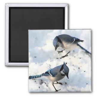 雪の自然のアオカケスの鳥 マグネット
