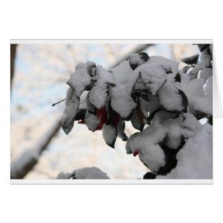雪の花 カード