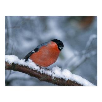 雪の郵便はがきのオスのBullfinch ポストカード