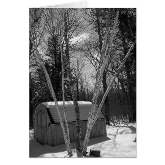 雪のB&Wの樺の木 カード