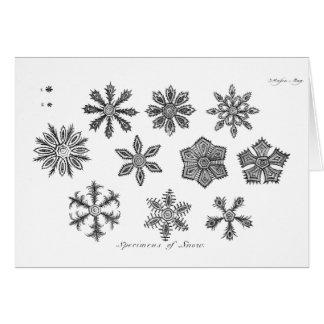 雪片 -- 1791年 カード