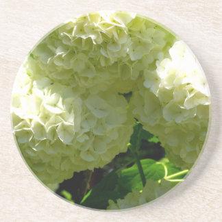 雪玉のブッシュの開花 コースター