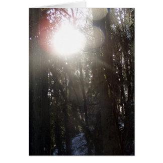 雪#50の森林日曜日光線 カード