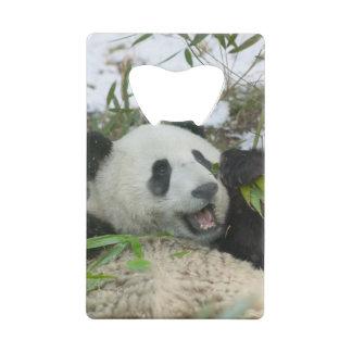 雪、Wolong、四川のパンダの食べ物のタケ、 クレジットカード 栓抜き