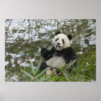 雪、Wolong、四川のパンダの食べ物のタケ、 ポスター