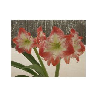 雪Iの赤の休日の冬の花柄のアマリリス ウッドポスター