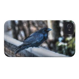 雪IIのCorvid恋人の芸術のデザインのワタリガラス Case-Mate iPhone 4 ケース