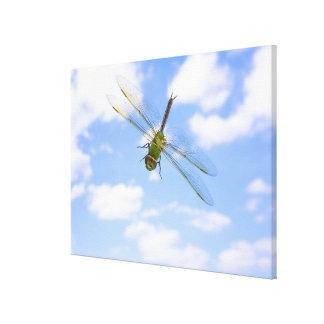 雲に対する緑のdarner (Anaxのjunius)の飛行 キャンバスプリント