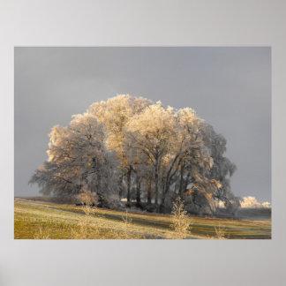 霜の降りたな朝の木 ポスター