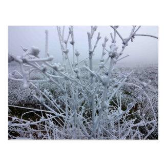 霜の降りたな植物の冬の景色 ポストカード