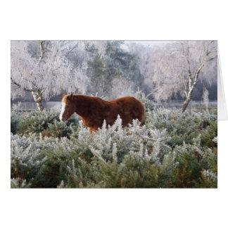 霜カードの子馬 グリーティングカード