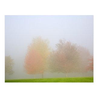 霧で覆われる秋の木 ポストカード