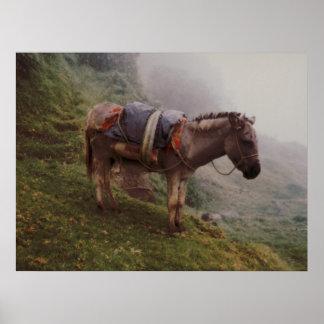 霧のコロンビアのろば ポスター