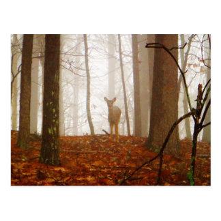 霧のシカ ポストカード