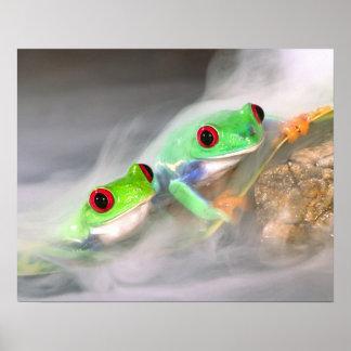 霧の赤い目Treefrog、Agalychinis 2 ポスター