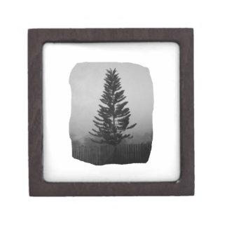 霧深いノーフォークのマツ白黒写真 ギフトボックス