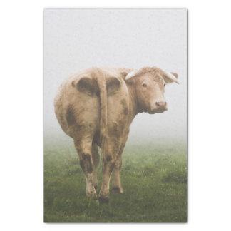 霧深い分野を見る白い牛Bull 薄葉紙