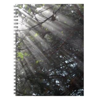 霧深い森林のSunrays ノートブック