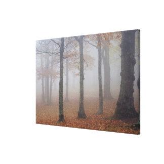 霧深い森林、祖父の秋の眺め キャンバスプリント
