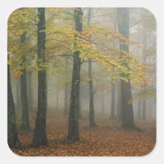 霧深い森林、祖父3の秋の眺め スクエアシール