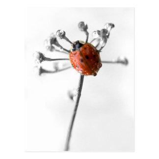 露が付いているディルの花のBug女性 ポストカード