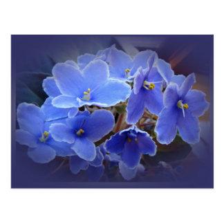 青いアフリカバイオレット ポストカード