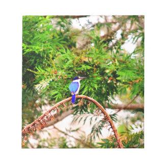 青いカワセミクイーンズランドオーストラリア ノートパッド